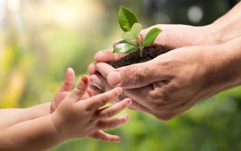 Protezione ambientale. Approvata la legge al Senato