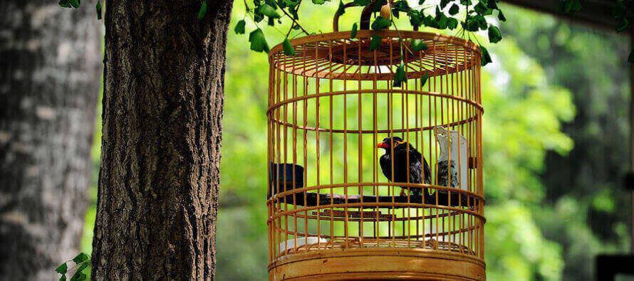 Mi sento chiusa in  gabbia come un uccellino
