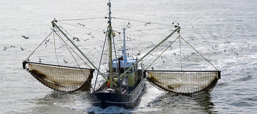 Pesca elettrica cos'è e che effetti ha sul mare