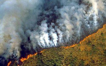 L'Amazzonia sta bruciando perché il mondo mangia troppa carne