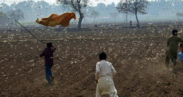 India: arrivano anche le locuste