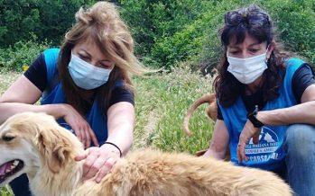 In Liguria più denunce e indagati per reati contro animali