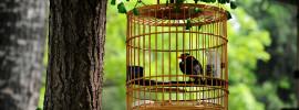 Uccello in gabbia appeso ad un albero